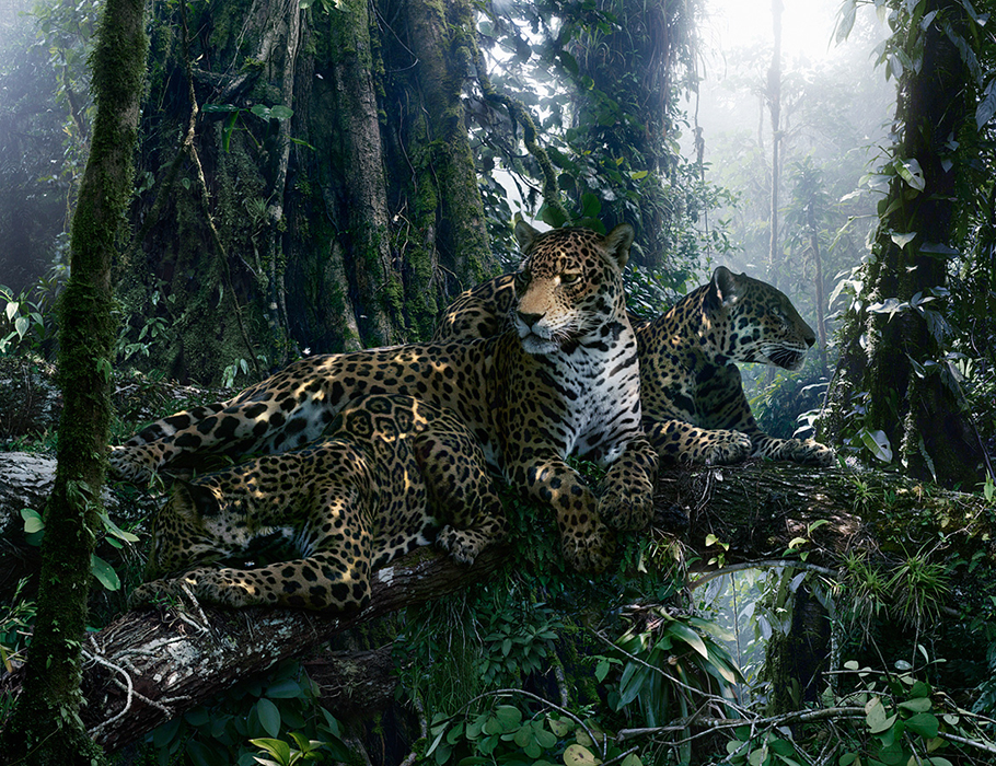 large-simen_johan-untitled-183-jaguars