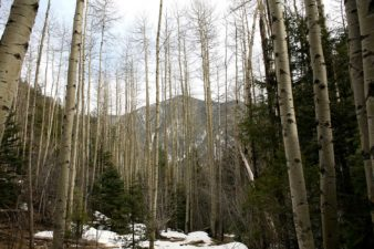 U.S.-New-Mexico-Taos-Mountain-Forest-Winter-Snow-003